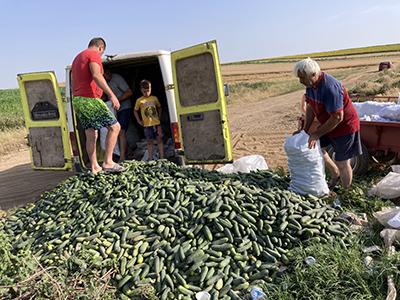 Situaţie incredibilă într-o localitate din Mehedinţi, unde aproape toţi ţăranii şi-au aruncat recolta de castraveţi de anul acesta pe un câmp de la marginea satului, asta după ce au...